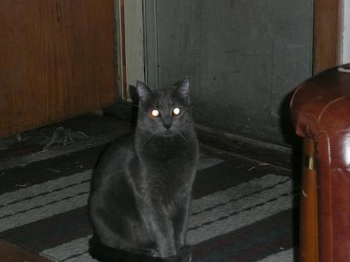 Smokey, Jim's cat