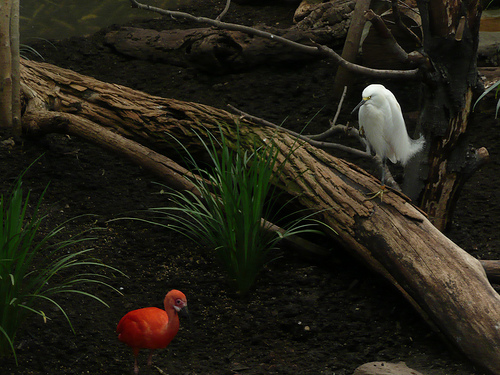 orange bird and egret