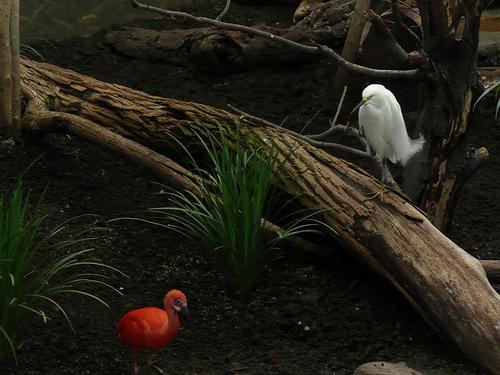 orange bird and egret