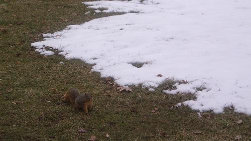 squirrel in Lakewood Park