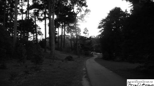 Golden Gate Park (black and white)