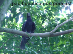 black parrot at the National Aviary