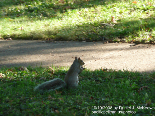 squirrel in Lakewood